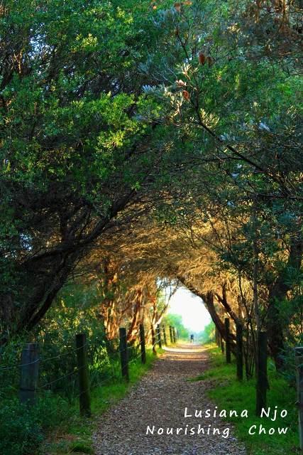 A path to a beach