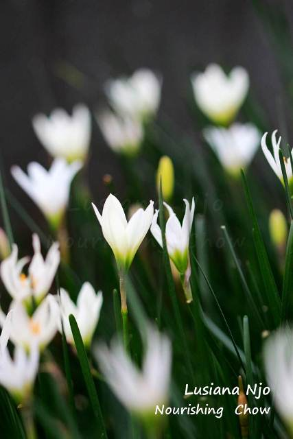 Decorative grass with white flowers