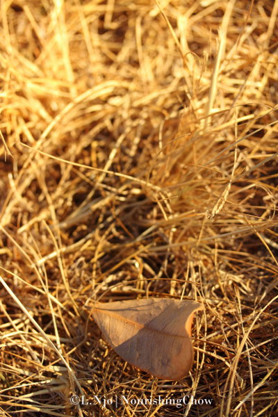 Dry leaf and grass
