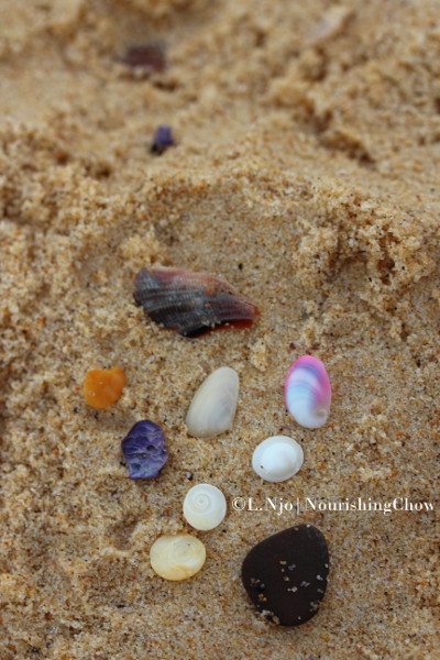 Coogee's seashell treasures