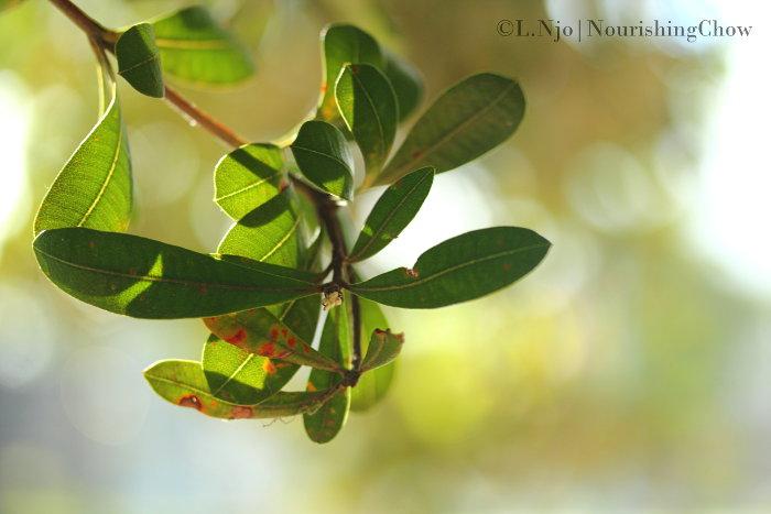 Sunbathing leaves on a tree