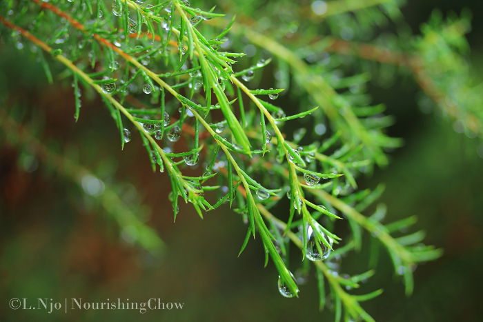 Drenched leaves and water droplets