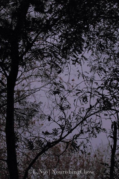Tree silhouette dusk sky