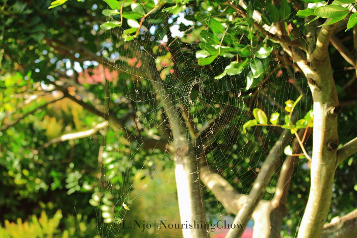 big spider web, tree