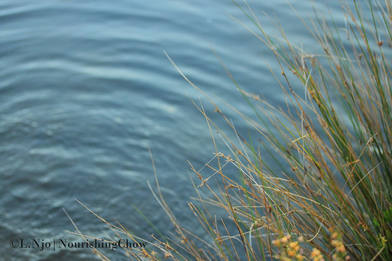 ripple, reed, water