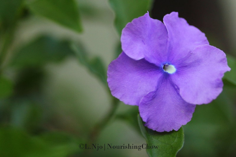 purple flowers, 5 petals