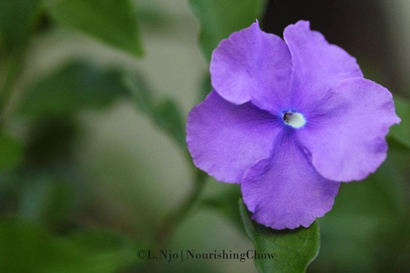 purple flowers, 5 petals