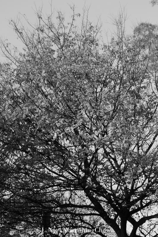 tree, black and white