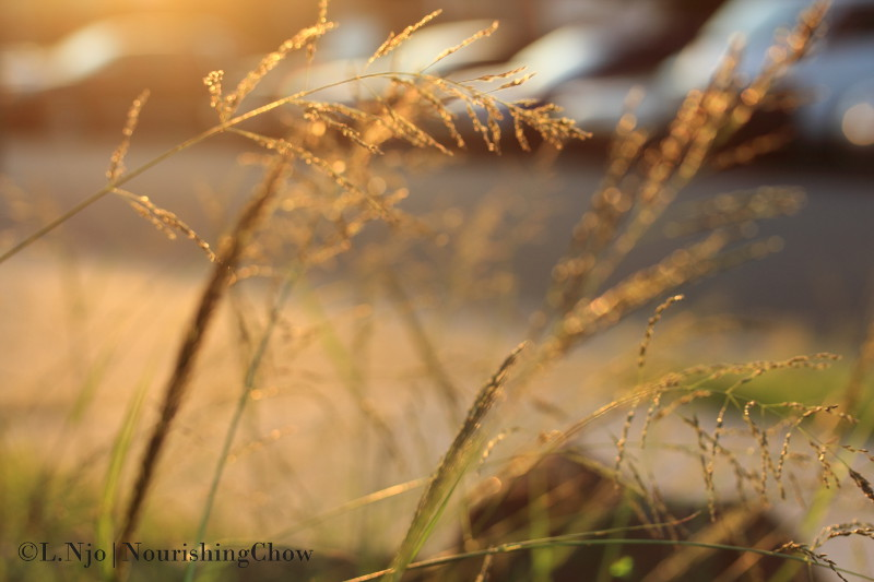 sun flare, tall weeds, sway
