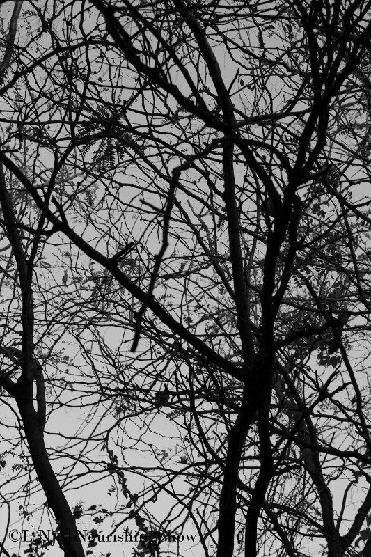 tree branches, crisscross, intricate