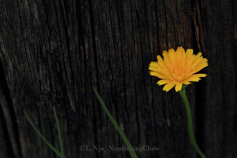 yellow dandelion flower, wooden pole, rustic canvas