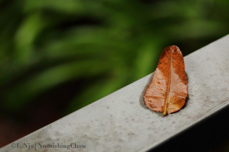 Soaked dry leaf