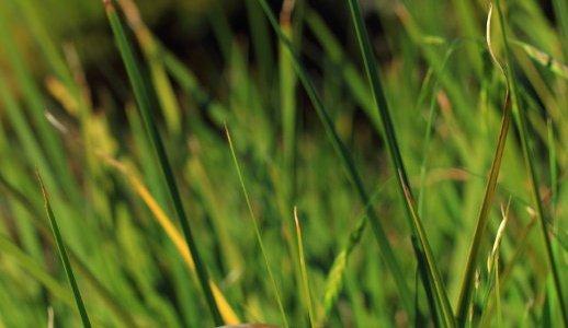 tall grass, perspective distortion