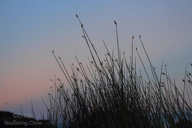twilight, tall grass
