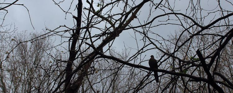 Pigeon, bird, tree, winter, contemplation
