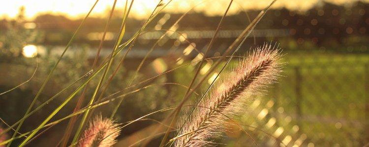 sun glare, tall grass
